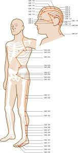 gallbladder-meridian