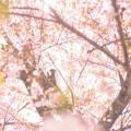 Seed Training シードトレーニング ヨガ ハタヨガ 陰ヨガ Yoga Yin Yoga タイ古式マッサージ 初心者 体験 尼崎 兵庫 大阪 西宮 伊丹 宝塚 呼吸法 瞑想 メディテーション エネルギー プラナ